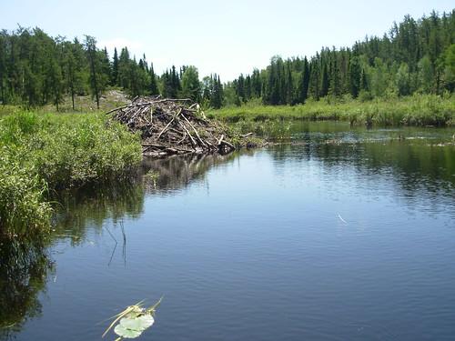 black lake and rabbit river 2009 072