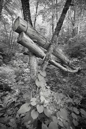 Fallen Lovers,Julian Price Park,NC
