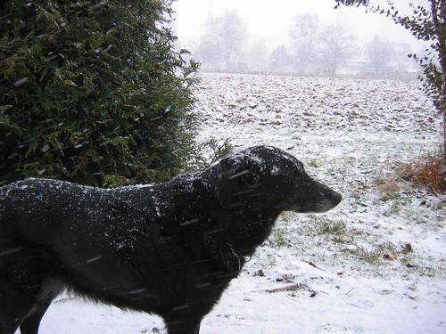 snow feb09