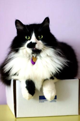 Alistair Cat