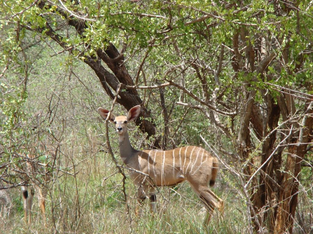 Wildlife Tsavo West National Park