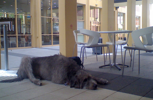 Mega Dog on Campus