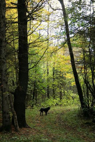 woods20