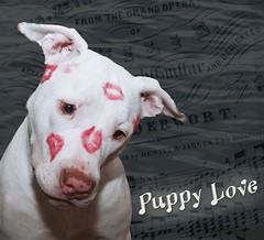 Kissy Face White Puppy Dog Love, Kahuna Luna c...