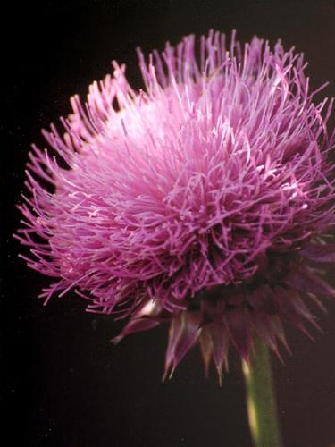 highlighted flower (c) Lynne Medsker