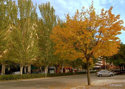 Avenida de Sancho el Fuerte
