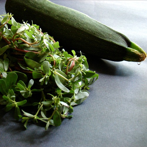 purslane and zucchini