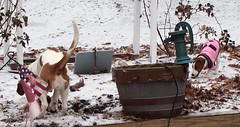 Sissy digging the ice & the garden, while Gretchen just looks on