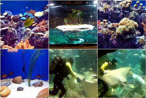 HK Atoll Reef