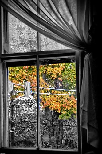 The Tree Outside My Window