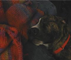 sleepingMick_andsweater
