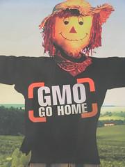 OGMs vão para casa by Cintia Barenho