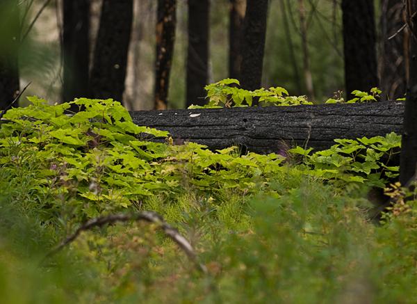berries and burned log
