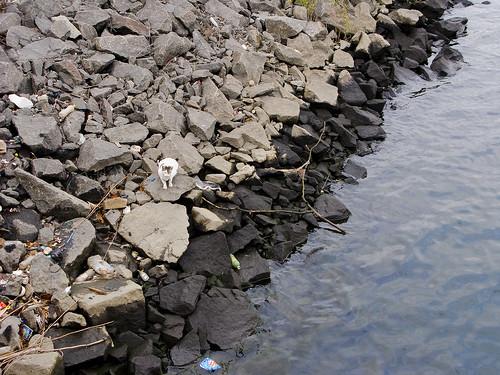 Grand Street Cat, Newtown Creek by you.