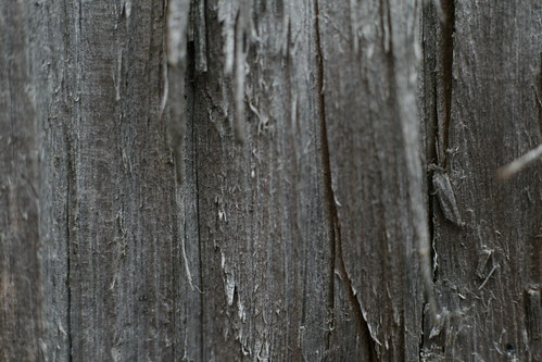 Old Wood—texture