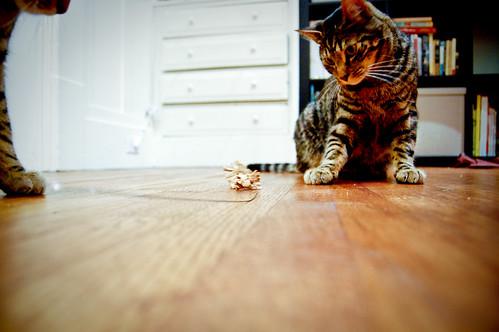 cat dancer_4