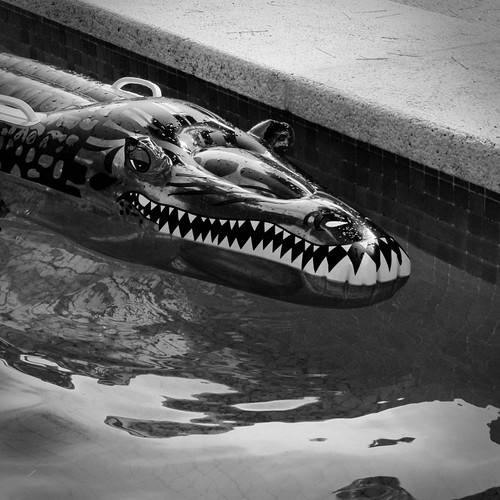 Larmes de Crocodile - Photo : Frederic Giet (Gilderic)