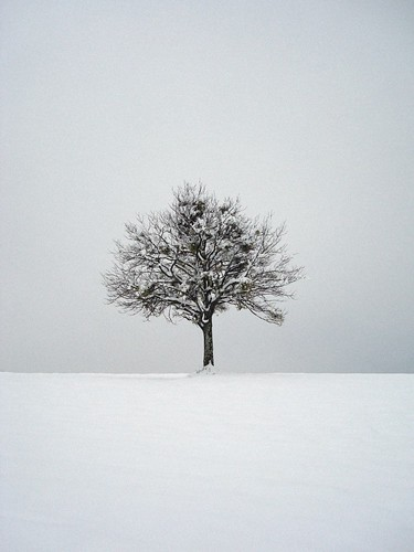 lonely tree in the snow by santo rizzuto