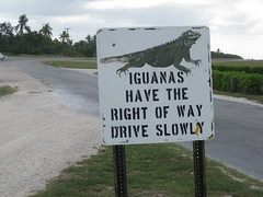 Right of way sign on Little Cayman Island