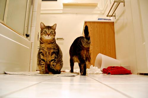 bad cat behavior, ep. 4