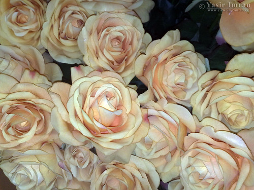 Artificial Yellow-Pink Roses