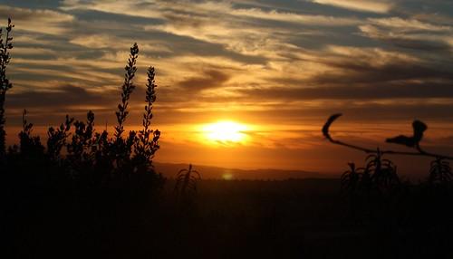 rancho santa margarita hills, CA