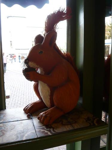 Bakery squirrel, AMS