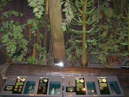 Bosque carbonífero