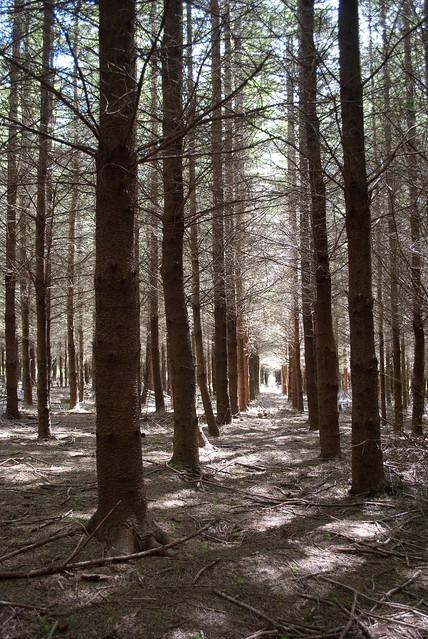 Planted woodland