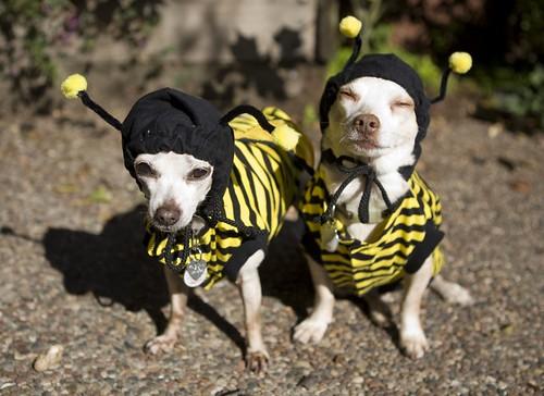 Beedogs