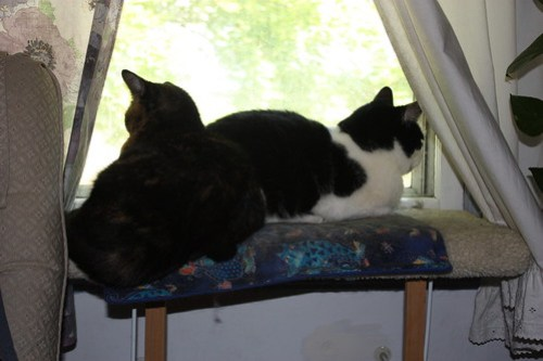 Cats on the window seat