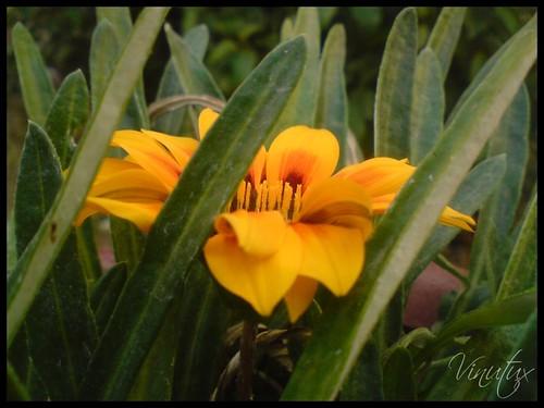 Yel-Flo-bglr-2009-2