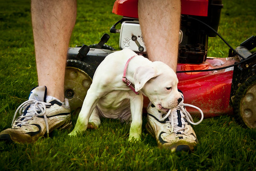 Lawnmower Puppy