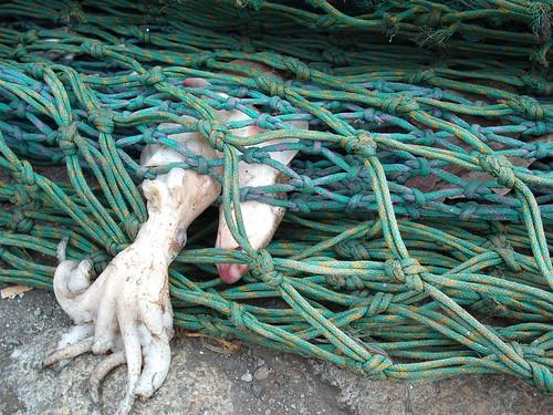 Howth nets