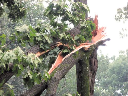 Cracked tree