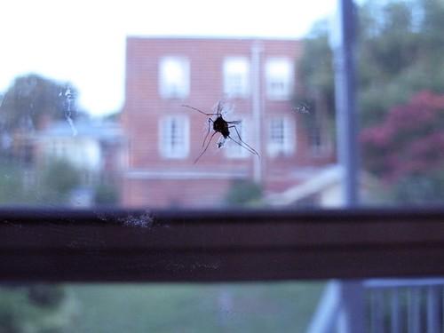 mosquito-0069.jpg