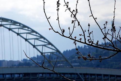 Freemont Bridge 03