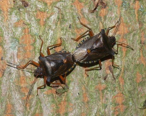 Forest bugs