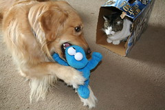 Sadie showing KeKe her toy