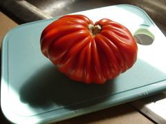 a lone survivor!  my one tomato