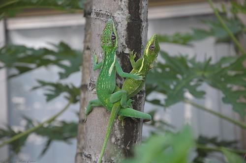 Lovin' Lizards