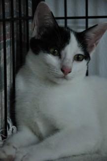 Lucky_kitten_20090912_001_DSC_0083x
