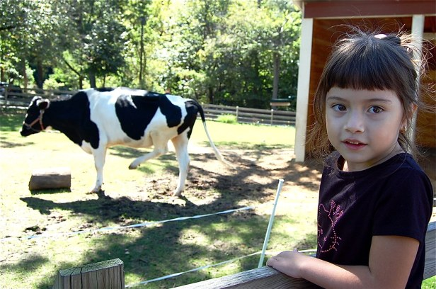 Look, mom! The cow can stand on two legs. Or something.