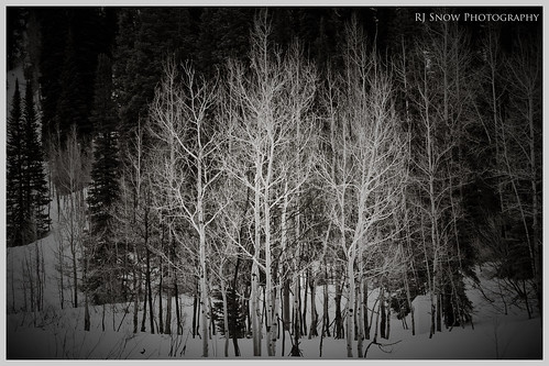 Foto Friday - White Trees