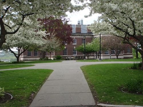 RPI - Between the Blossoms
