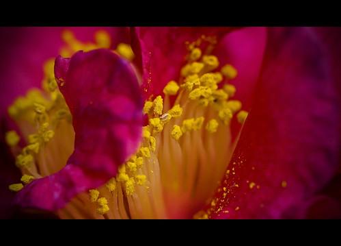 Chewy Walk - Flower