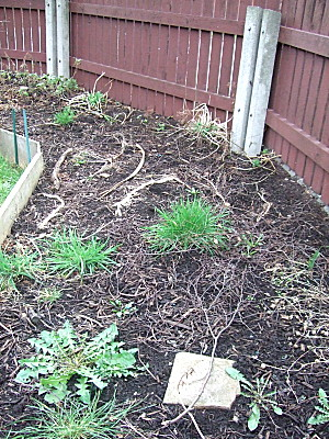 still to do - the other end of bed 5, you can see some pretty big weed/grass tufts in there.
