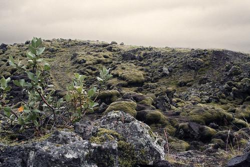 0608 Costa sud - verso Skaftafell