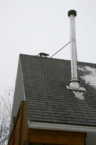 Cat on a cold shingle roof