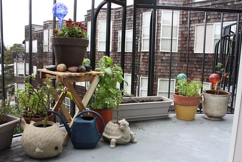My year round balcony garden